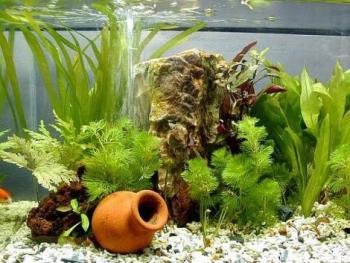 amazing-aquarium